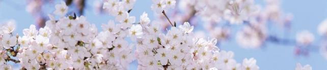 Цветы и растения_667