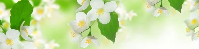 Цветы и растения_668