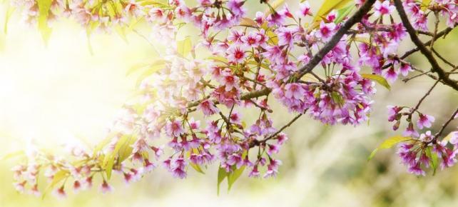 Цветы и растения_670