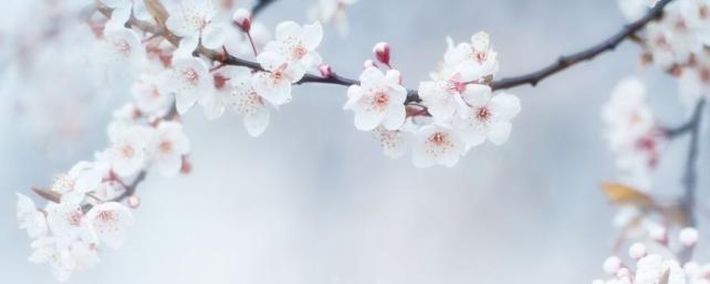 Цветы и растения_671