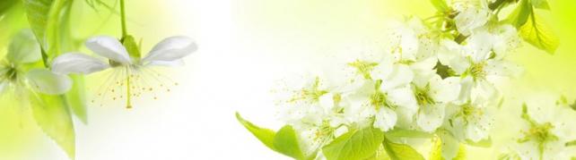 Цветы и растения_672