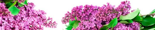 Цветы и растения_675