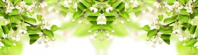 Цветы и растения_678