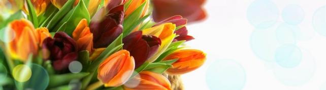 Цветы и растения_67