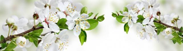 Цветы и растения_684