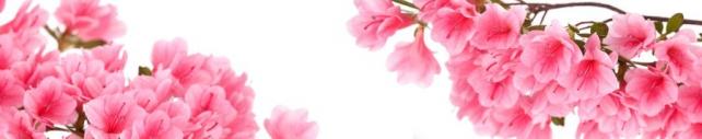 Цветы и растения_687