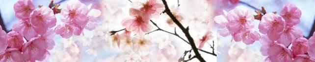 Цветы и растения_689