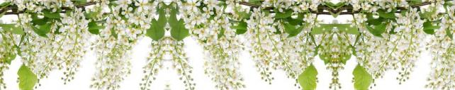 Цветы и растения_694