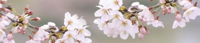 Цветы и растения_698