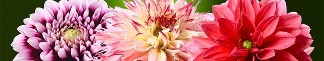 Цветы и растения_6
