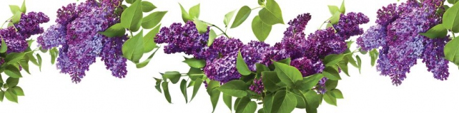 Цветы и растения_701