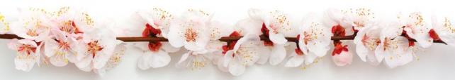 Цветы и растения_702