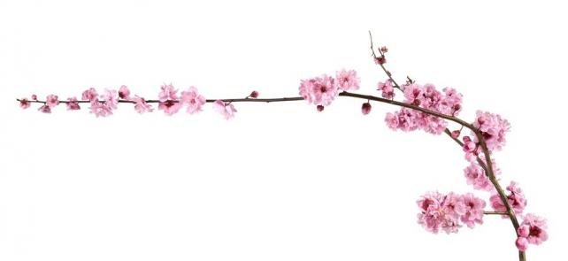 Цветы и растения_703