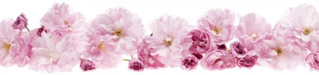 Цветы и растения_704