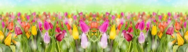 Цветы и растения_70