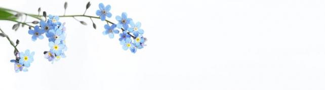 Цветы и растения_710