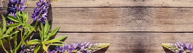 Цветы и растения_713