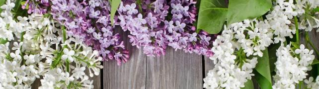 Цветы и растения_716