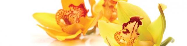 Цветы и растения_735