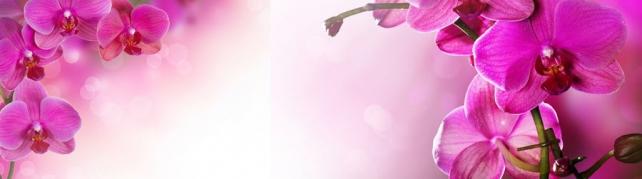 Цветы и растения_738