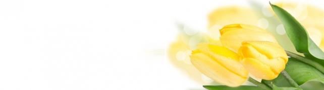 Цветы и растения_73