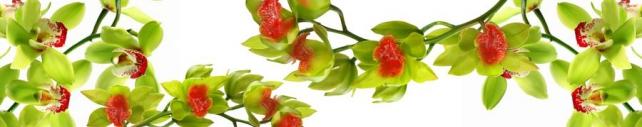 Цветы и растения_748