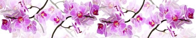 Цветы и растения_750