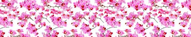 Цветы и растения_752