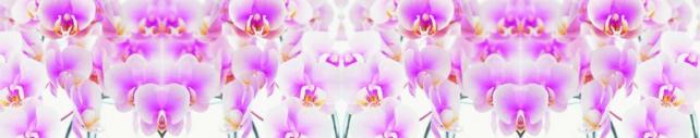 Цветы и растения_753