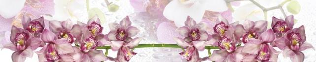 Цветы и растения_754