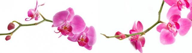 Цветы и растения_757