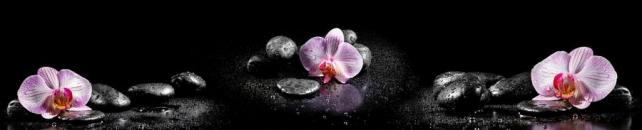 Цветы и растения_763