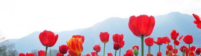 Цветы и растения_76