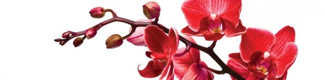 Цветы и растения_773
