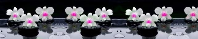 Цветы и растения_775