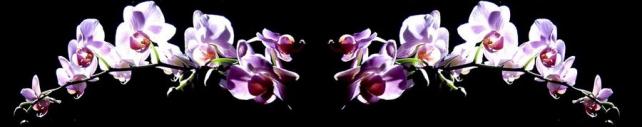 Цветы и растения_794