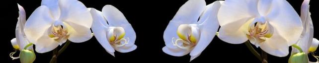 Цветы и растения_795