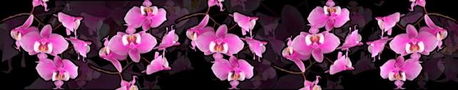 Цветы и растения_796