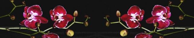 Цветы и растения_797