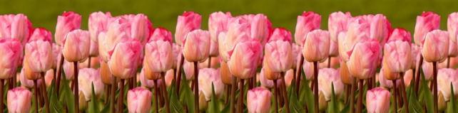 Цветы и растения_79