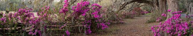 Цветы и растения_7