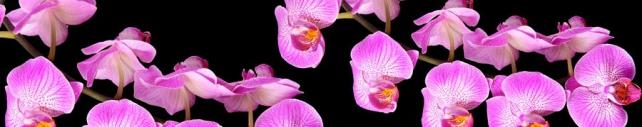 Цветы и растения_800