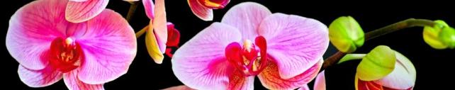 Цветы и растения_802
