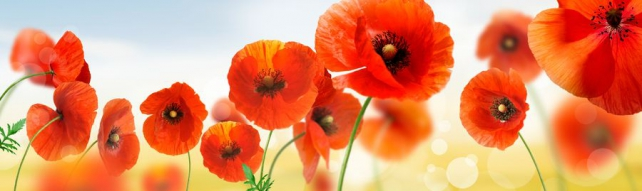 Цветы и растения_81