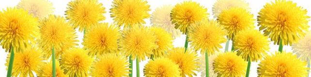 Цветы и растения_87