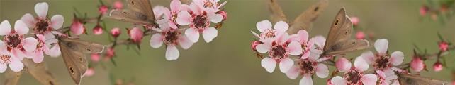 Цветы и растения_94