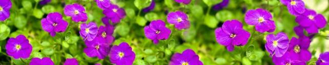 Цветы и растения_96