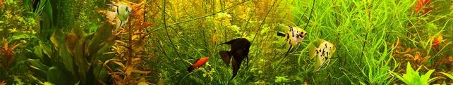 Подводный мир и животные_102