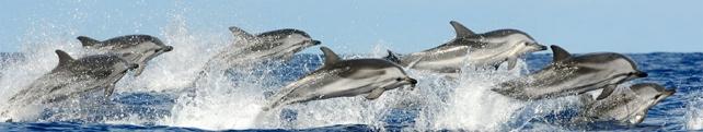 Подводный мир и животные_107