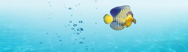Подводный мир и животные_174
